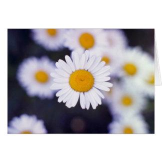 Flores amarillas de la margarita de ojo de buey tarjeta de felicitación