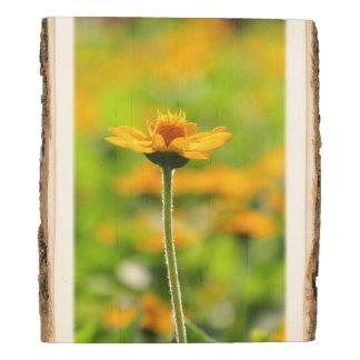 Flores amarillas de la margarita panel de madera
