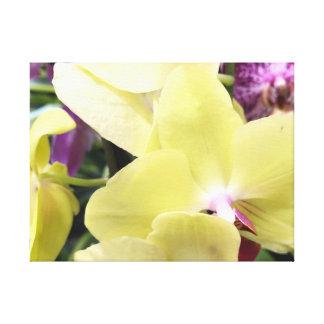 Flores amarillas en tiempo de primavera de la lona lienzo