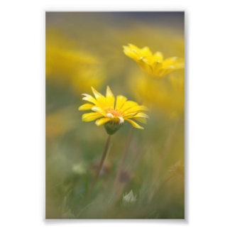 Flores amarillas fotografía