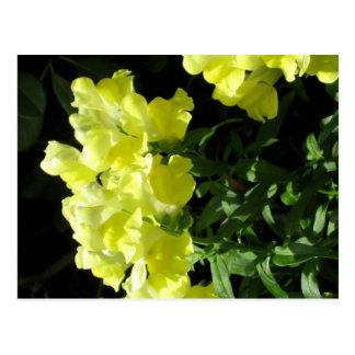 flores amarillas postal