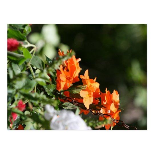 flores anaranjadas contra la parte posterior del postal