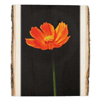 Flores anaranjadas del cosmos panel de madera