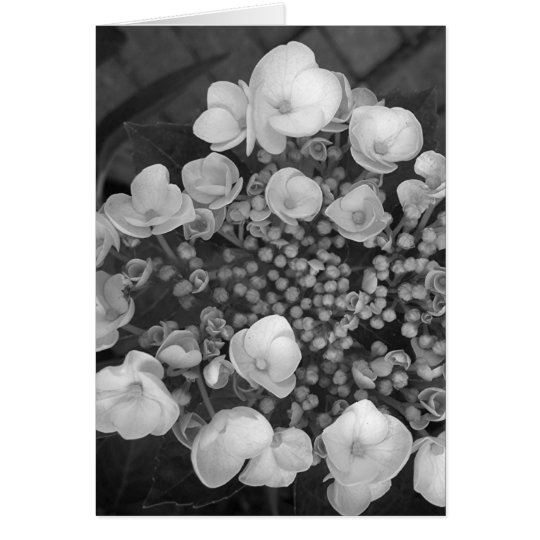 Flores B&W Tarjeta De Felicitación