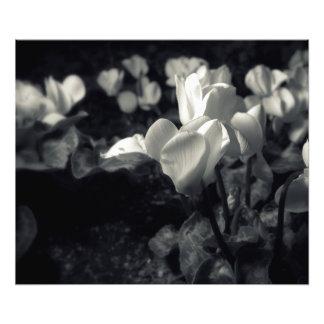 Flores bajo claro de luna arte fotográfico