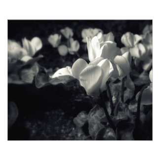 Flores bajo claro de luna foto