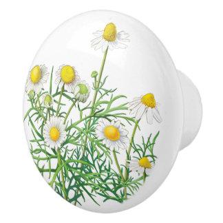 Flores blancas de la manzanilla del vintage bonito pomo de cerámica