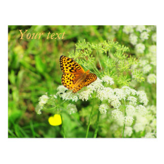 Flores blancas de la mariposa anaranjada y negra postal