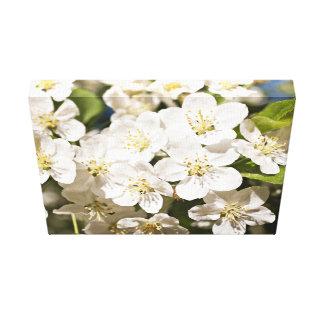 Flores blancas de Toringo del Malus Impresiones En Lona