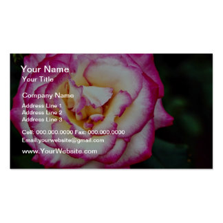 Flores blancas híbridas del rosa de té tarjetas de visita