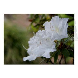 Flores blancas tarjeta de felicitación