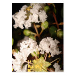 Flores blancas tarjetas postales