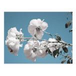 Flores blancas y cielo azul tarjeta postal