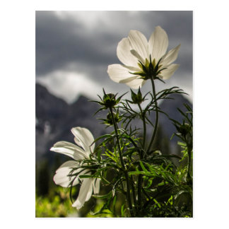 Flores blancas y montañas postal