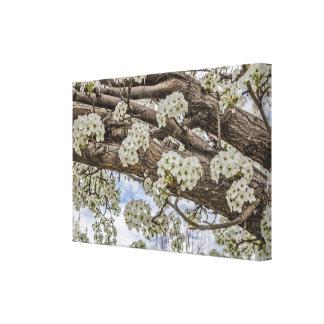 Flores blancos de Crabapple Impresión En Lienzo