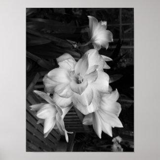 Flores blancos y negros de la fotografía póster