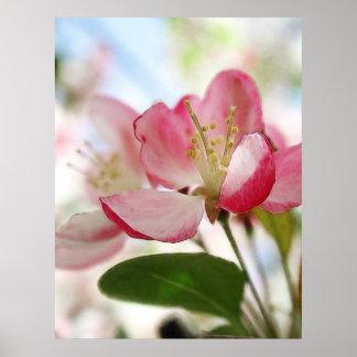Flores brillantes de Apple de la primavera Póster