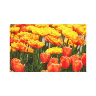 Flores coloridas de la primavera lienzo
