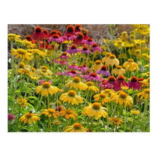 Flores coloridas del echinacea en la floración postal