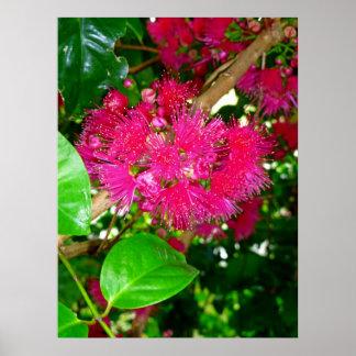 Flores de Apple de la montaña Póster