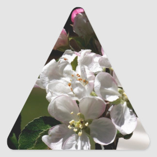 Flores de Apple Pegatina Triangular