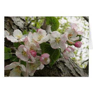 Flores de Apple salvaje - tarjeta de felicitación
