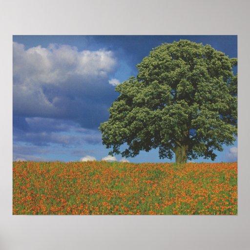 Flores de Canadá de la naturaleza: BARATO sensual  Poster