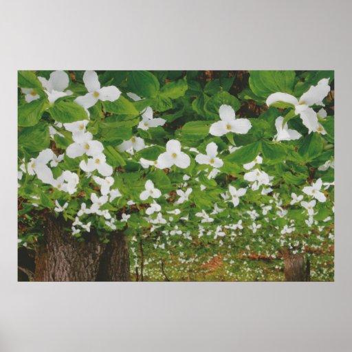 Flores de Canadá de la naturaleza: BARATO sensual  Posters