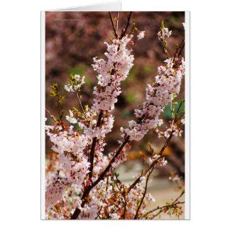 Flores de cerezo 4 tarjeta de felicitación