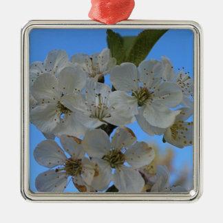 Flores de cerezo ornato