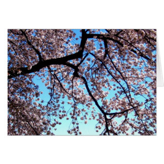 Flores de cerezo * amor tarjeta de felicitación