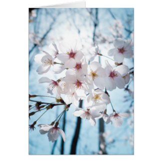 Flores de cerezo de Asia Tarjeta Pequeña