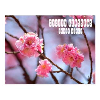 Flores de cerezo en Corea del Sur Postal