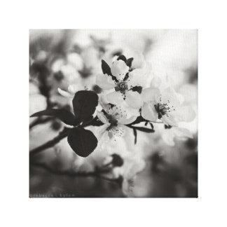 Flores de cerezo en la impresión negra y blanca de