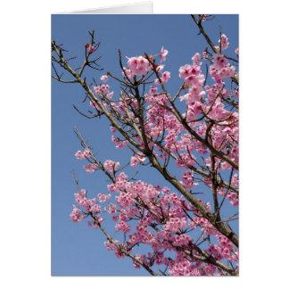 Flores de cerezo rosadas hermosas y cielo azul tarjeta pequeña