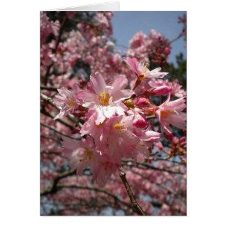 Flores de cerezo tarjeta pequeña