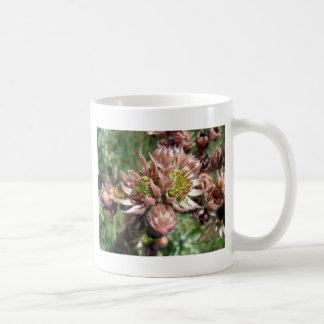 Flores de la gallina y de los polluelos taza de café