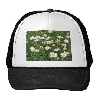 Flores de la margarita blanca en fondo verde gorras