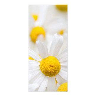 Flores de la margarita folleto publicitario 10 x 22,8 cm