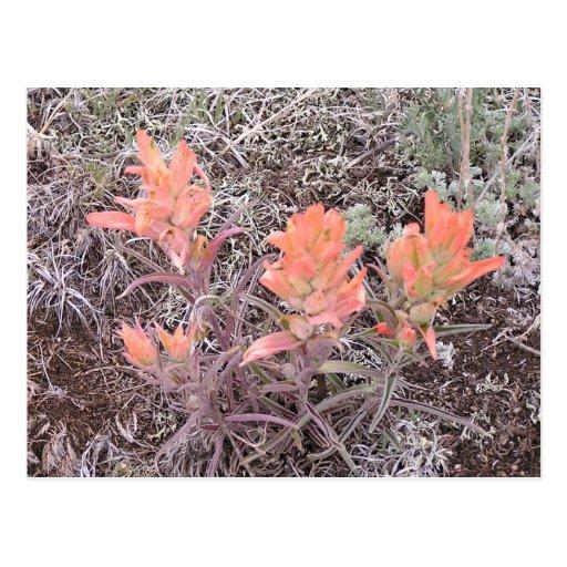 Flores de la montaña tarjeta postal