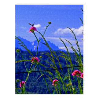 Flores de la montaña postal