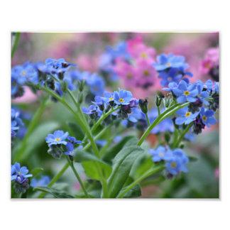 Flores de la nomeolvides foto