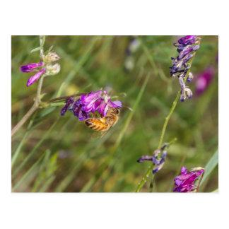 Flores de la primavera y una abeja postal