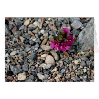 Flores de la tarjeta de nota de Death Valley del ~