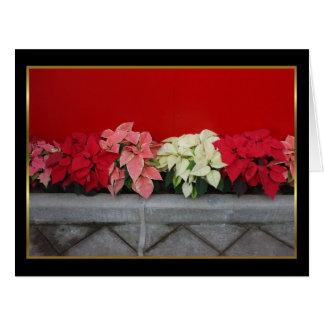 Flores de Pointsettia del navidad Felicitaciones