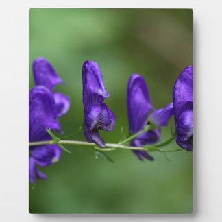 Flores de un Akonite (variegatum del Aconitum) Placa Expositora