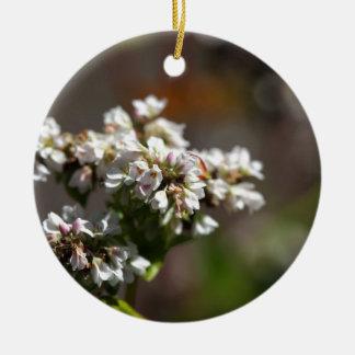 Flores de una planta del alforfón (Fagopyrum Adorno De Cerámica