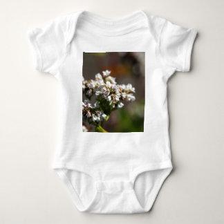 Flores de una planta del alforfón (Fagopyrum Body Para Bebé