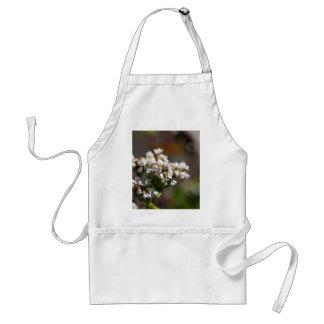 Flores de una planta del alforfón (Fagopyrum Delantal