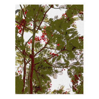 Flores del árbol del helecho y lona rojas de las postal